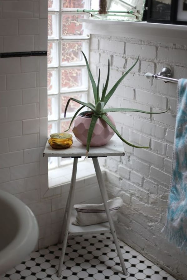 Bathrooms Aloe vera