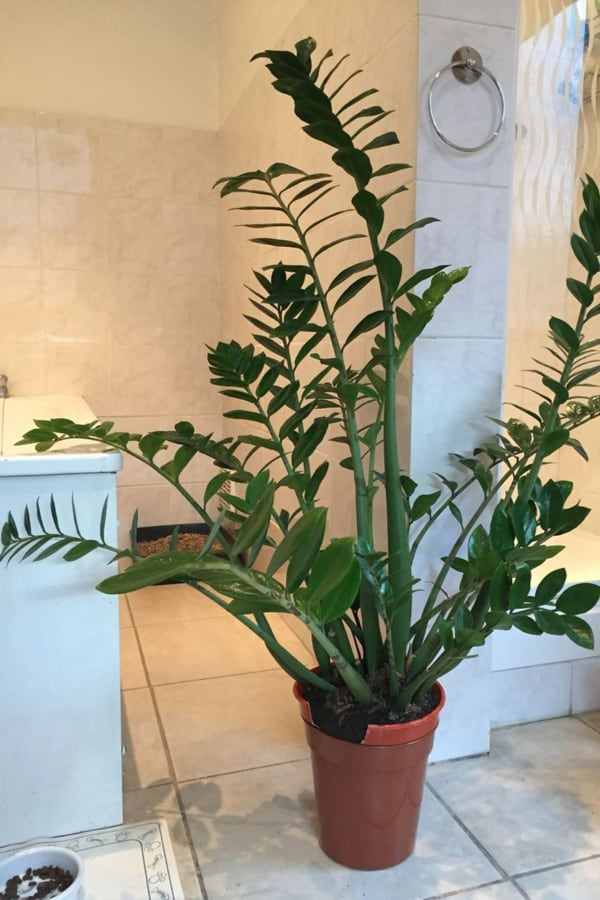 Bathrooms Eternity plant