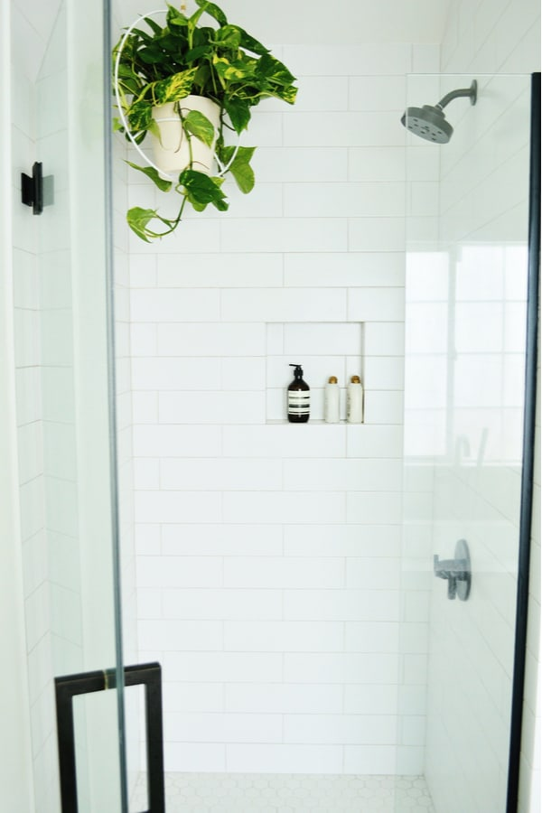 Bathrooms Pothos