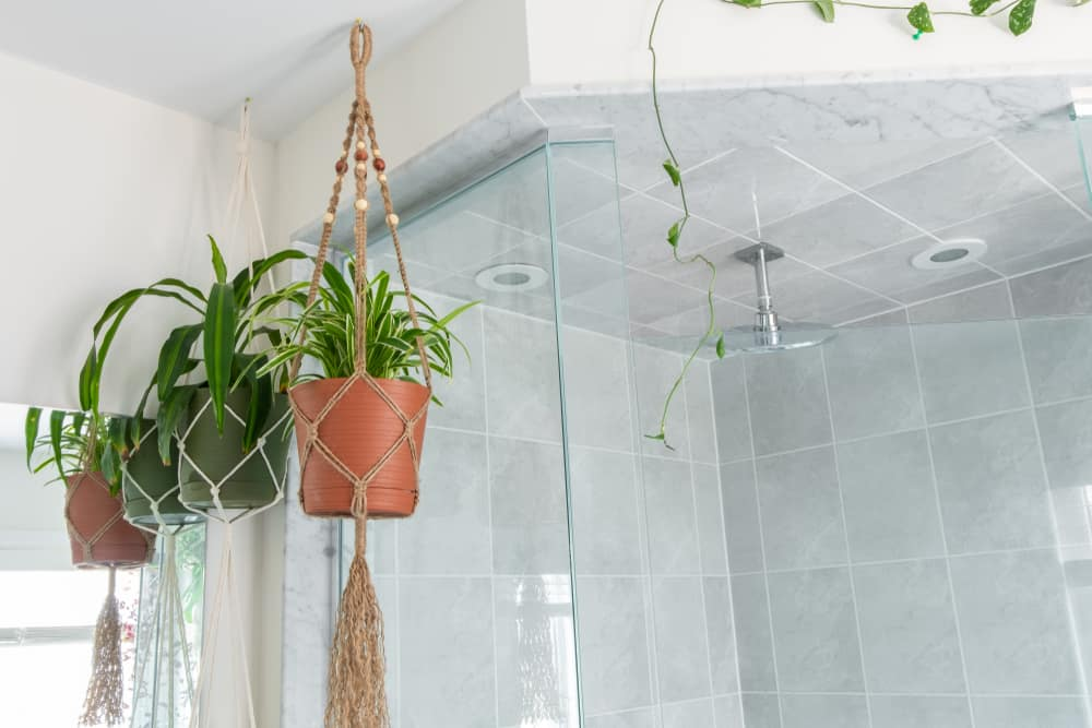 Bathrooms Spider plant