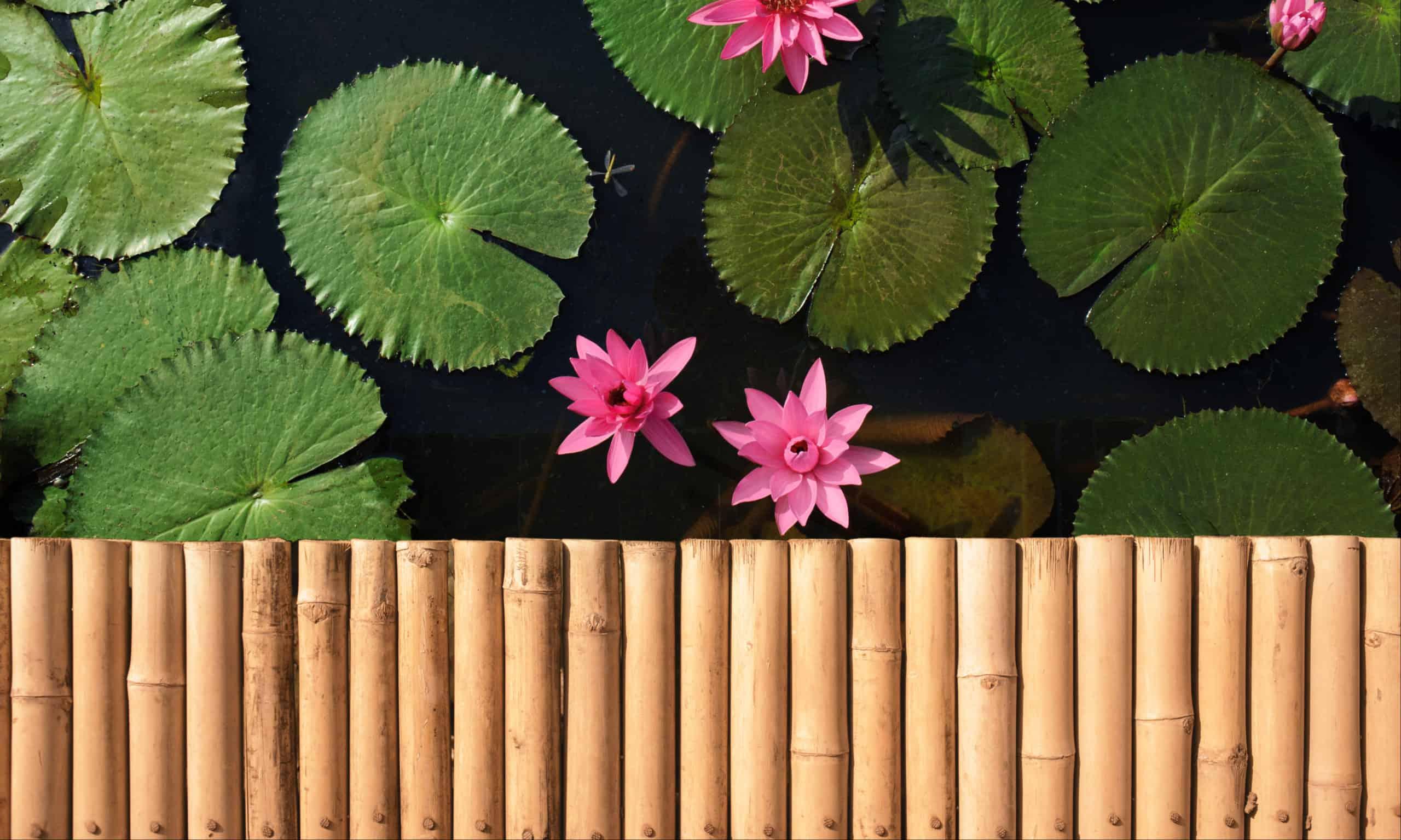 Bamboo countertop material