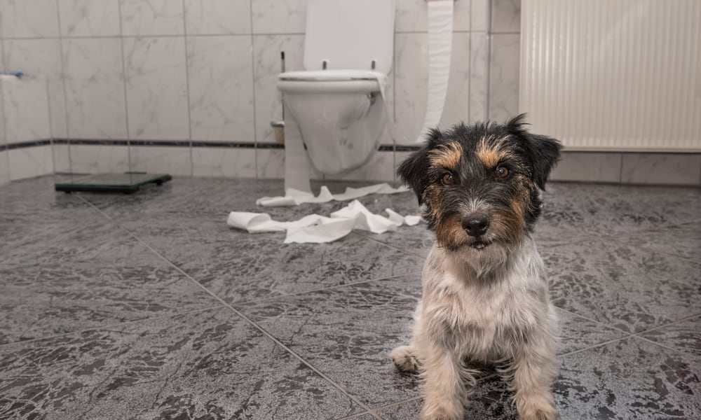 17 Reasons Why Do Dogs Follow You to the Bathroom