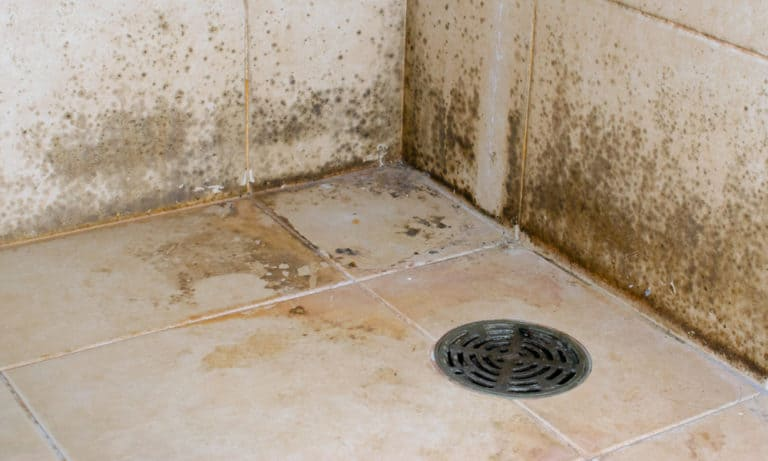 19 Tips to Get Rid of Black Mold in the Bathroom