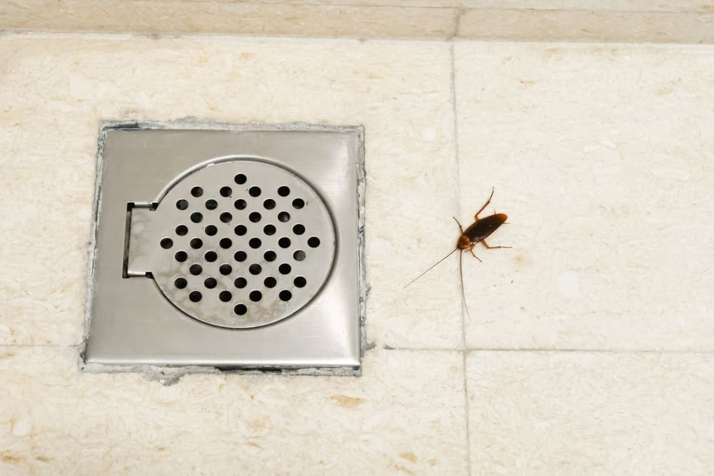 Other Bugs You Can Find in Your Bathroom