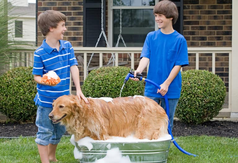 31 Homemade Dog Bath TubsWashing Station Ideas
