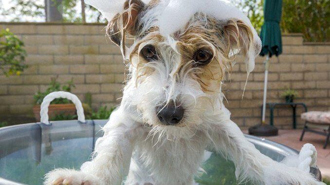 All Things Dogs DIY Shampoo