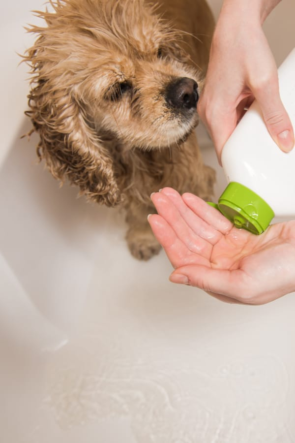 Bullymax DIY Dog Shampoo