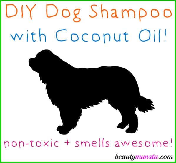 DIY Coconut Dog Shampoo