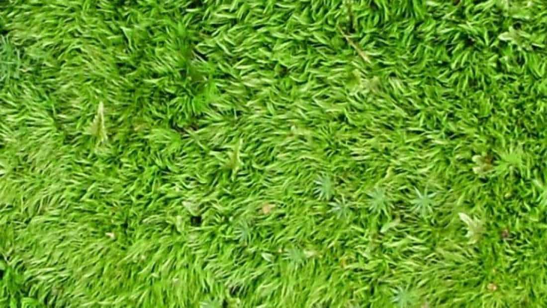 IFL DIY Moss Shower Mat