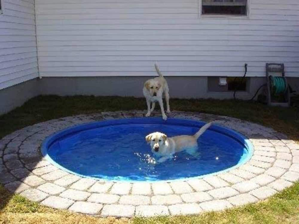 Kiddie Pool DIY Dog Bath Tub