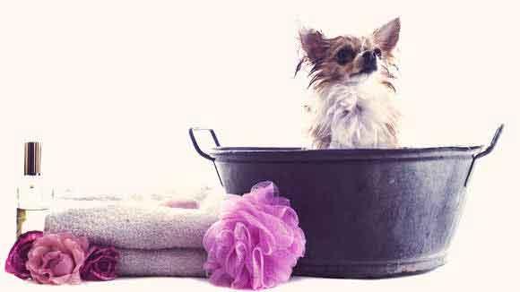 Pet Carerx DIY Dog Shampoo