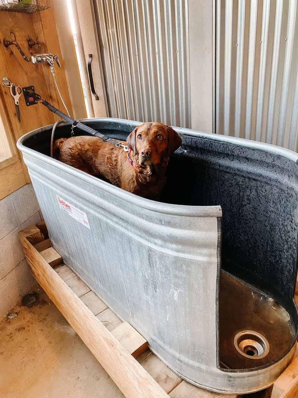 Thermaland Oaks DIY Dog Bath Tub